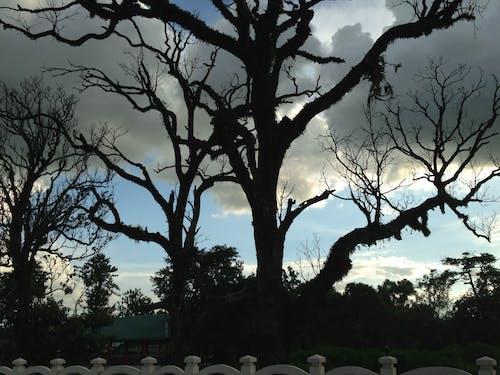 Free stock photo of beautiful plant, black tree, horrified