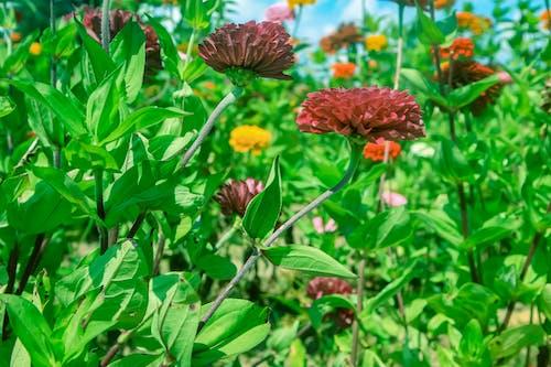 Free stock photo of field, field of flowers, flower, flowers