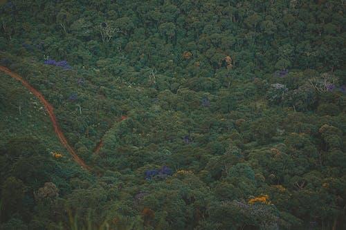 Kostenloses Stock Foto zu bäume, draußen, drohne aufnahmen, drohne erschossen