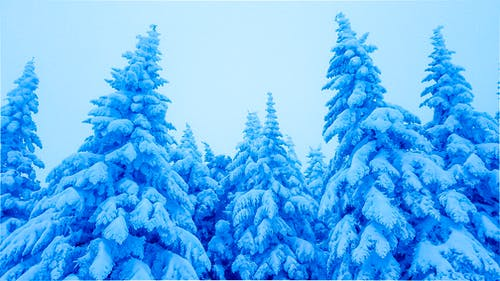 Free stock photo of snow, snow covered, winter, winter background