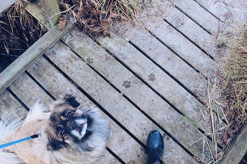 Základová fotografie zdarma na téma domácí mazlíček, dřevěný, dřevo, pes