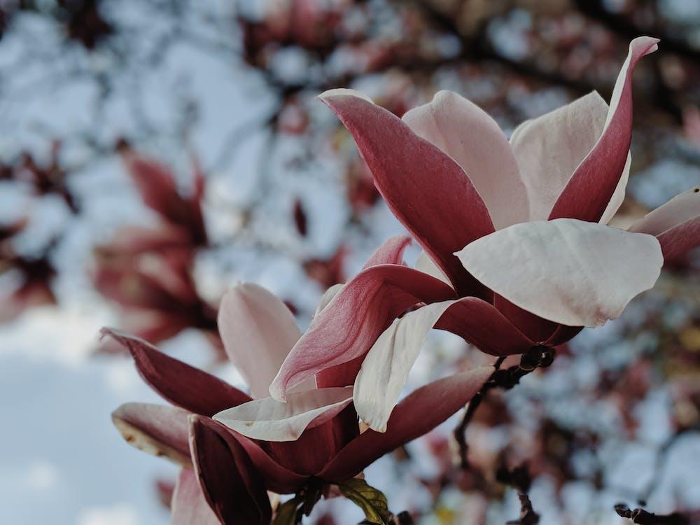 beauté, botanique, centrale