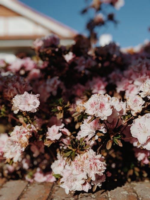 Gratis arkivbilde med anlegg, atmosfære, blomst, blomster