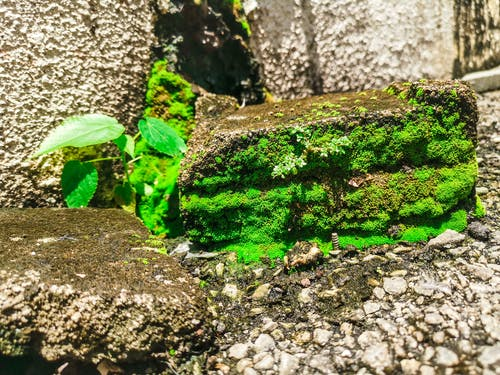 Безкоштовне стокове фото на тему «завод, зелений, мох, придорожній»