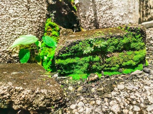 Free stock photo of brick, green, moss, plant