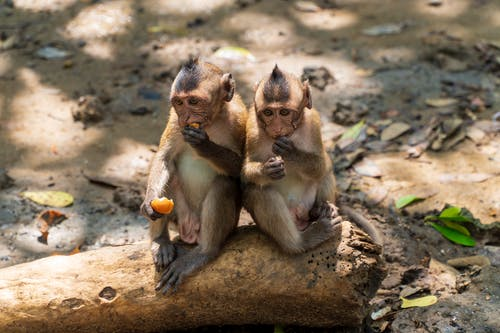 Photo Of Two Monkeys Sitting On Rock