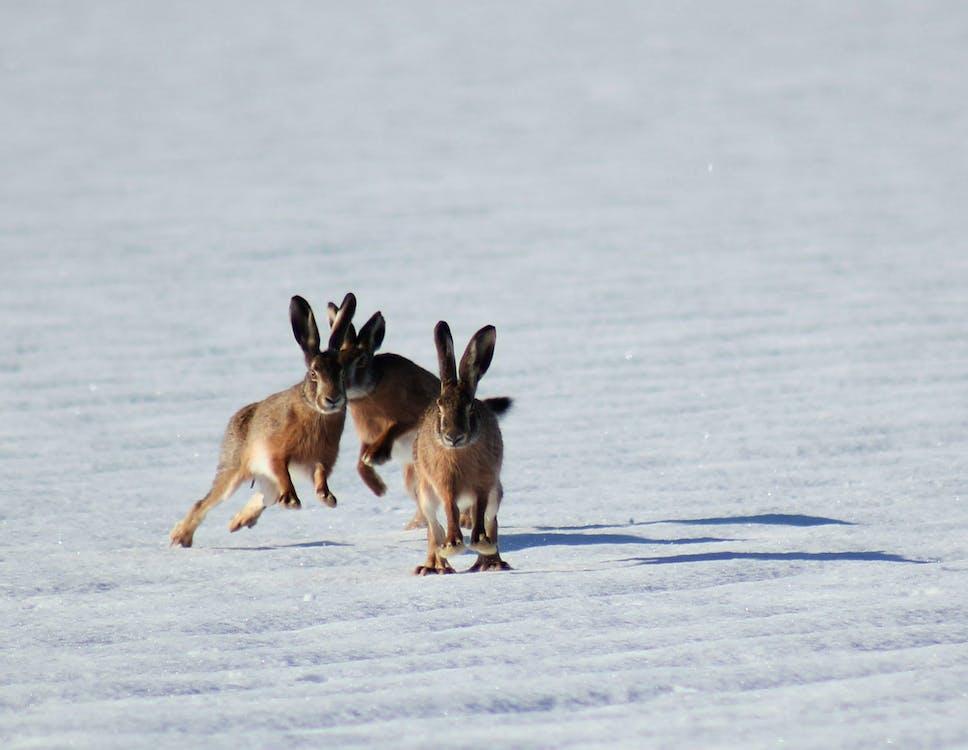 Three Brown Bunnies