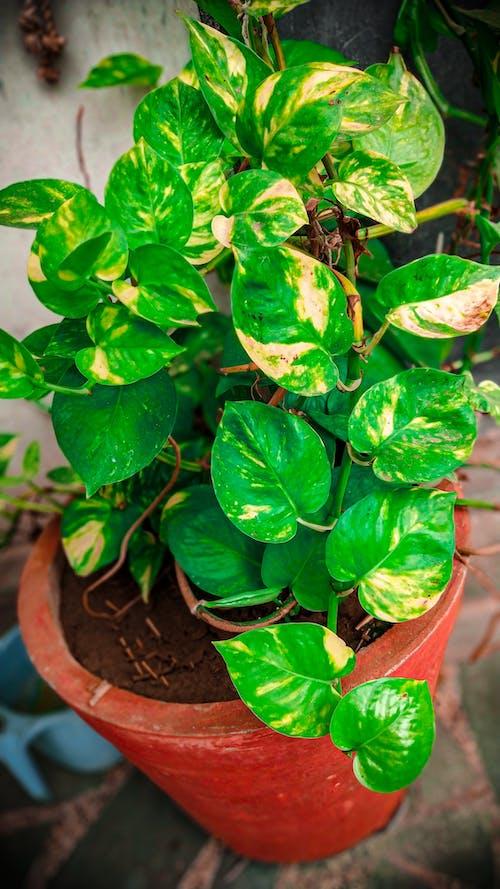 Gratis lagerfoto af grøn, Grøn plante, nærbillede foto, natur
