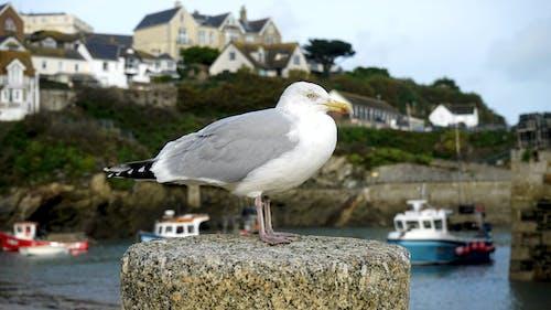 beyaz, deniz, deniz kenarı, deniz kıyısı içeren Ücretsiz stok fotoğraf