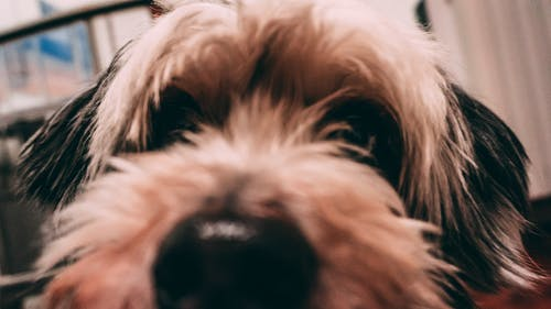 Free stock photo of animal, beauty in nature, bokeh, dog
