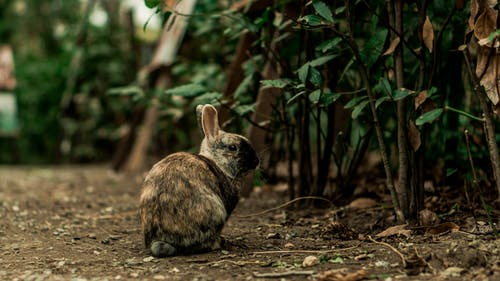 Selective Focus Photography of Gray Rabbit Sitting Beside Green Plants