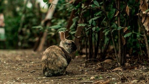 Gratis lagerfoto af dagslys, dyr, dyrefotografering, hare
