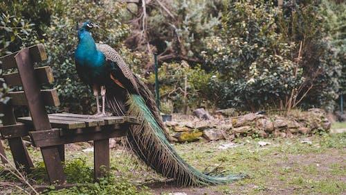 Ảnh lưu trữ miễn phí về Băng ghế, chim, chụp ảnh động vật, cỏ