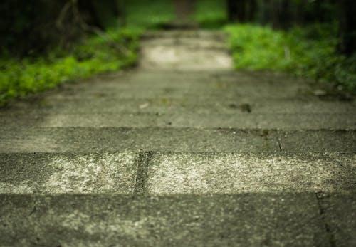 Δωρεάν στοκ φωτογραφιών με δασική διαδρομή, διέξοδος, δρόμος, Μακριά