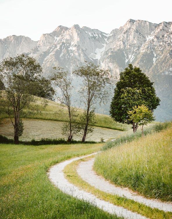 cestička, chodník, deň