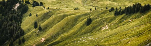 丘陵, 增長, 天性, 戶外 的 免費圖庫相片