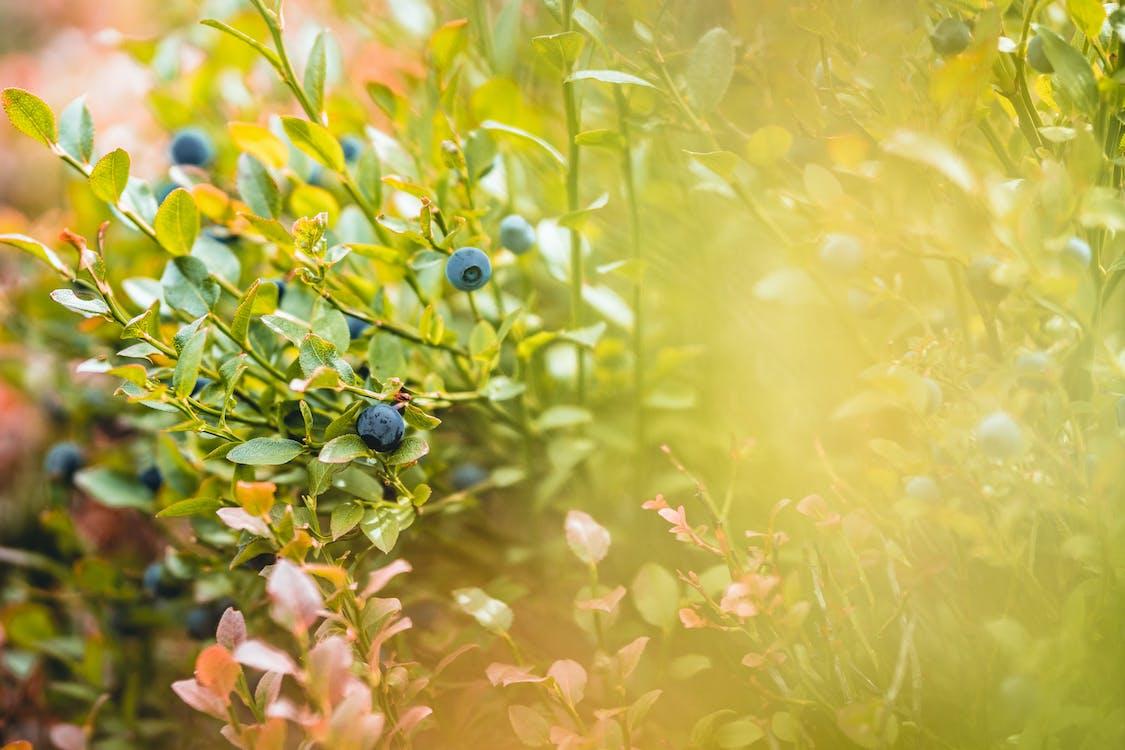 ánh sáng ban ngày, cận cảnh, chụp ảnh thiên nhiên