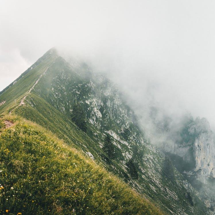 arbori, ceață, codru