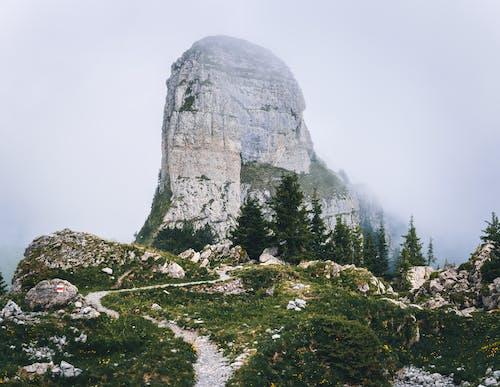 Photos gratuites de arbres, beau paysage, bois, brouillard