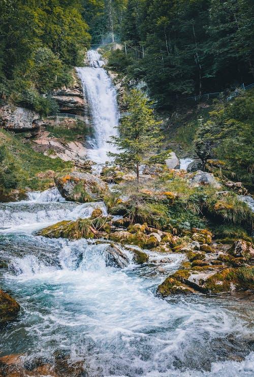 Foto profissional grátis de água, ao ar livre, árvores, aumento