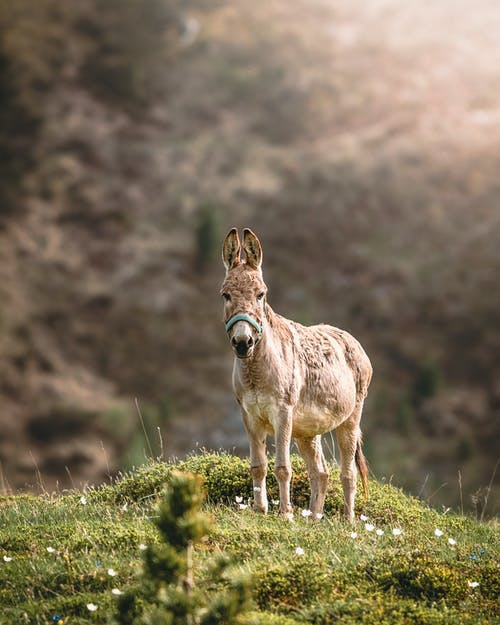 Selective Focus Photo of Brown Donkey
