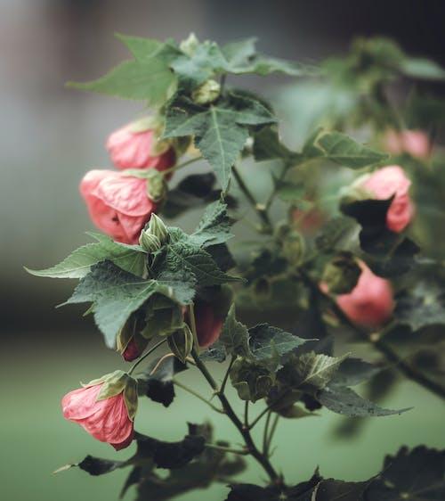 Gratis arkivbilde med anlegg, årstid, blader, blomst