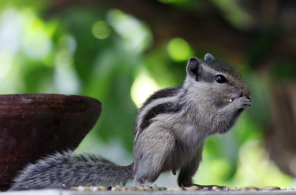 Close-Up Photo Of Squirrel