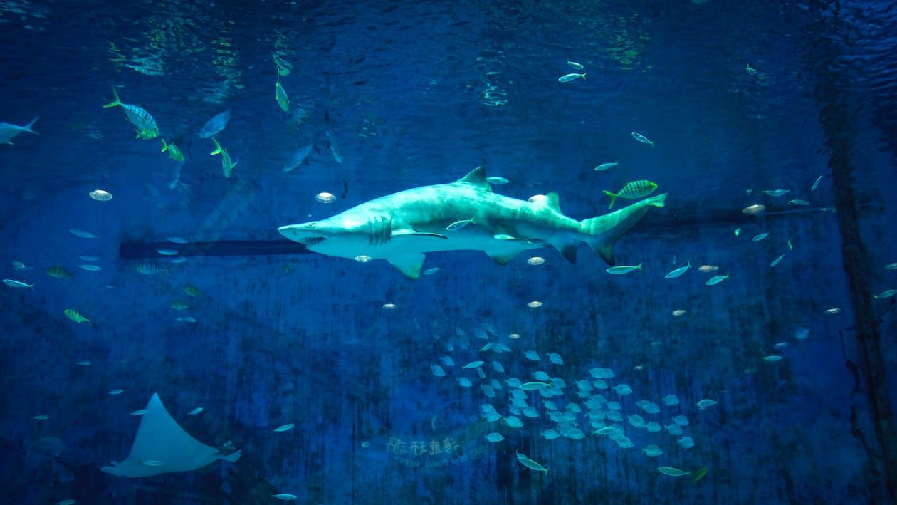 acvariu, adânc, animal marin