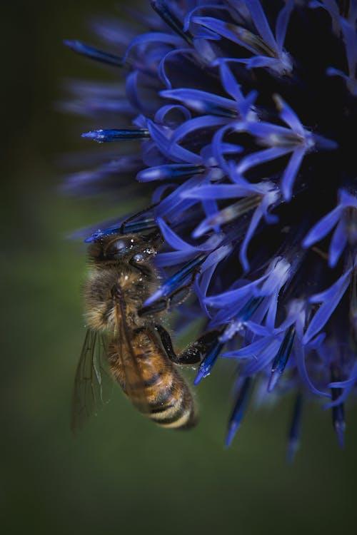 Ilmainen kuvapankkikuva tunnisteilla mehiläinen, mehiläiset, mehiläispesä