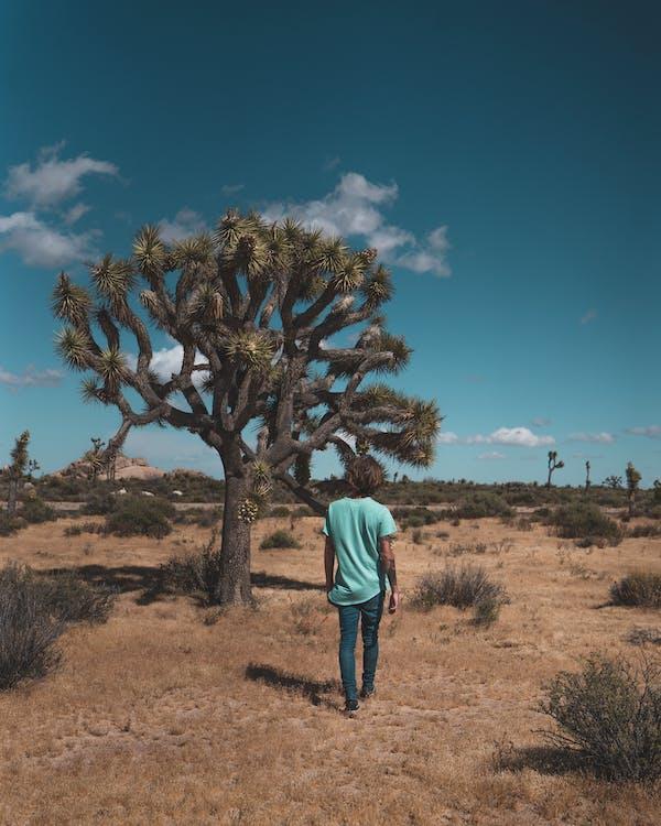Person Walking Near Tree