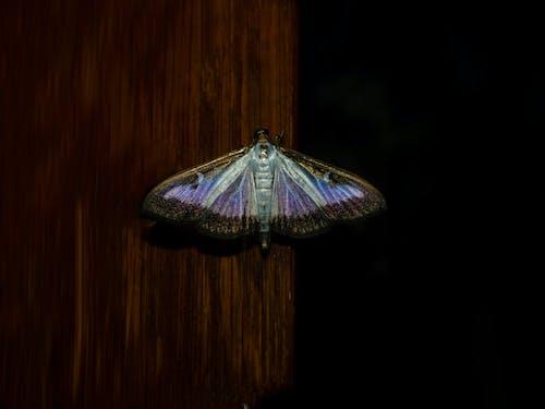 多色的, 晚上, 燈光, 紫羅蘭 的 免費圖庫相片