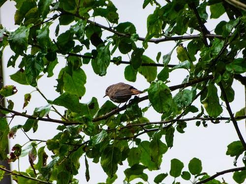 天性, 美麗的動物, 鳥 的 免費圖庫相片