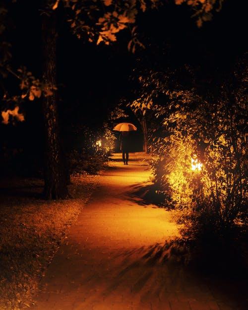 คลังภาพถ่ายฟรี ของ กลางคืน, กับ, ซอย, ตรอก