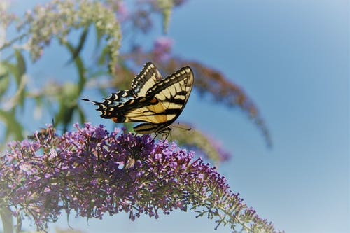 꽃에 앉은 나비, 나비, 나비 부시의 무료 스톡 사진