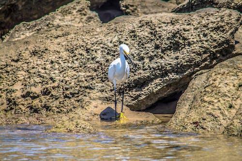 Free stock photo of beach, bird, fishing, nature