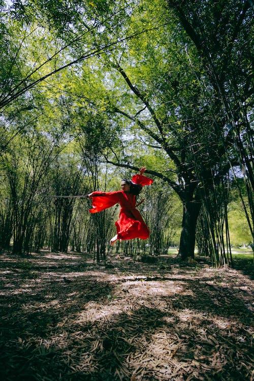 Immagine gratuita di alba, alberi di bambù, albero, ambiente