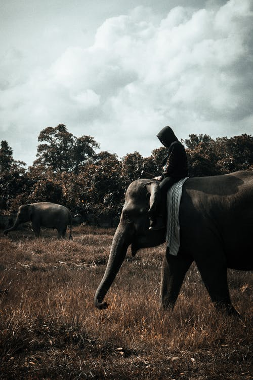 Photo Of Person Riding An Elephant