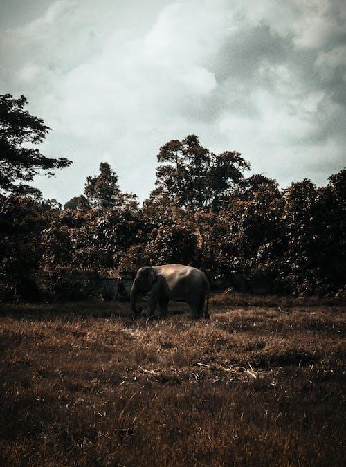 Photo Of Elephant During Daytime