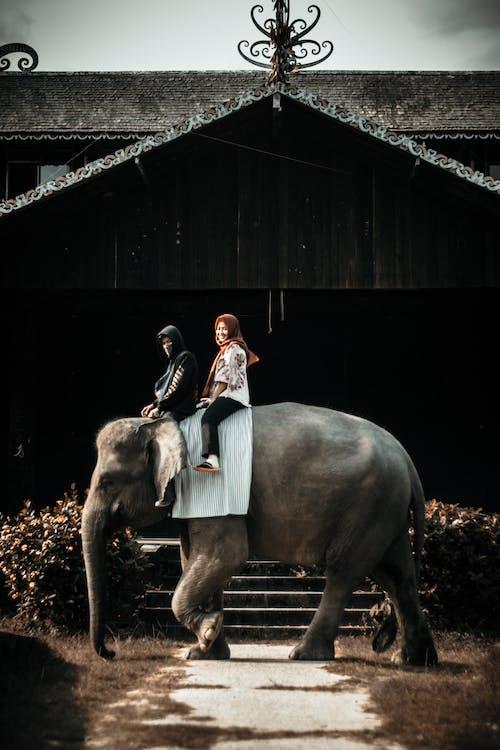 Photo Of Two Women Riding Elephant