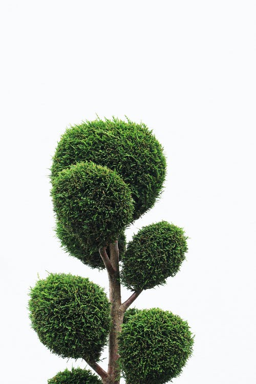 açık hava, ağaç, Bahçe, bahçe bakımı içeren Ücretsiz stok fotoğraf