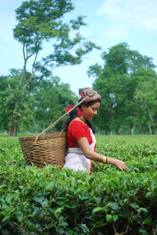 Безкоштовне стокове фото на тему «assam, індійська дівчина, азіатська жінка, зелене листя»