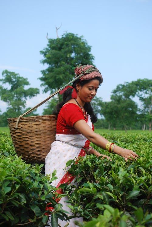 Photo Of Woman Picking Fruit