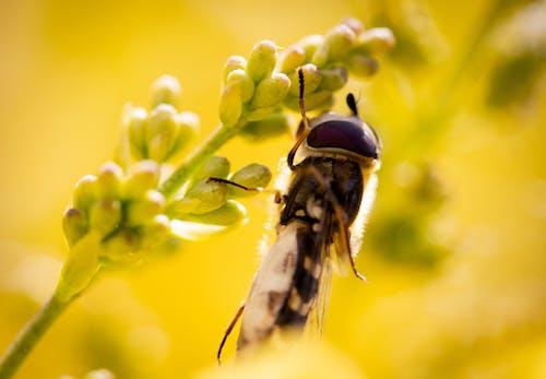 Ảnh lưu trữ miễn phí về ảnh macro, chụp ảnh thiên nhiên, chụp ảnh động vật, con ong