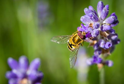 Ảnh lưu trữ miễn phí về ảnh macro, chụp ảnh côn trùng, chụp ảnh động vật, con ong