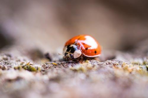 Ảnh lưu trữ miễn phí về ảnh macro, bọ rùa, chụp ảnh động vật, con thú nhỏ