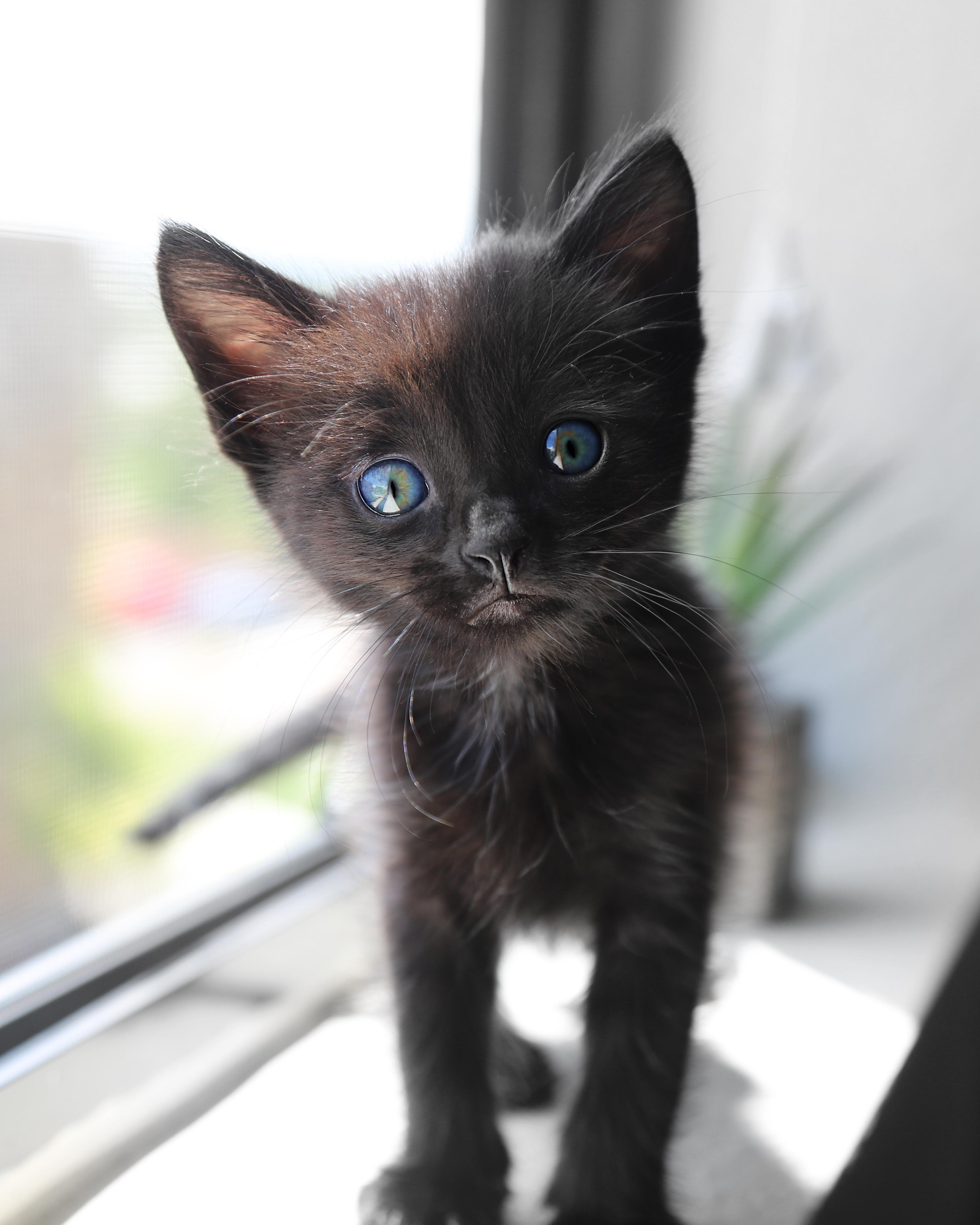 Cute cat image