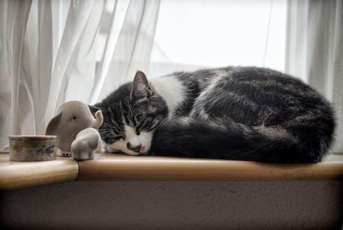 ネコ, ペット, 可愛い, 眠っているの無料の写真素材