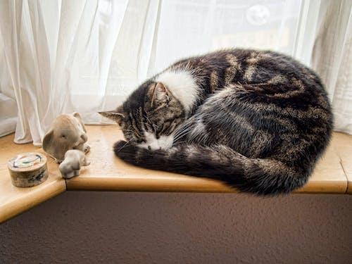ネコ, ペット, 可愛い, 窓の無料の写真素材