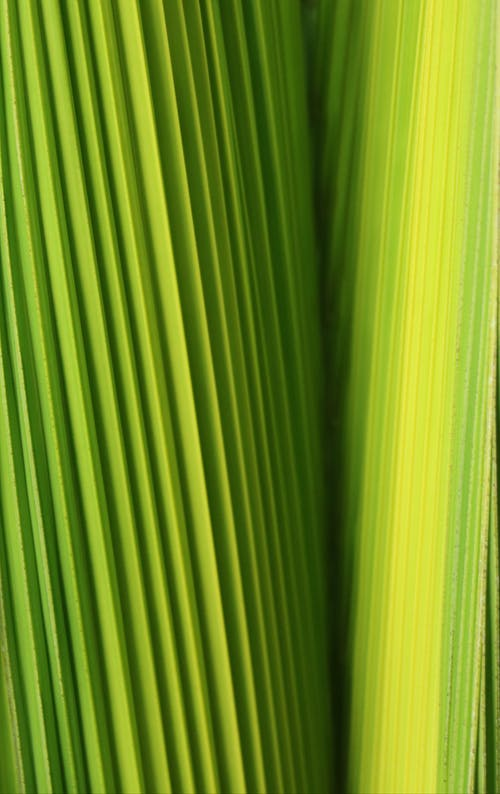 Abstract background of green leaves with vertical stripes