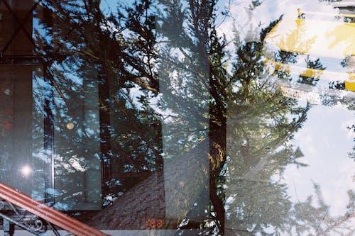 Photos gratuites de 35mm, arbre, bois, espace extérieur